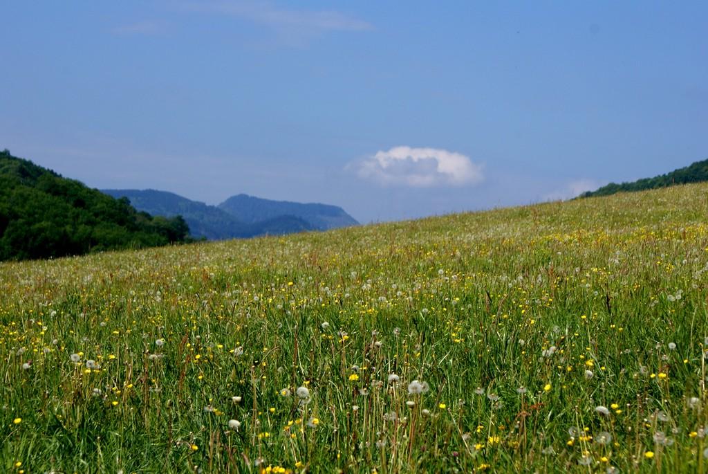 Prairie Breitenbach
